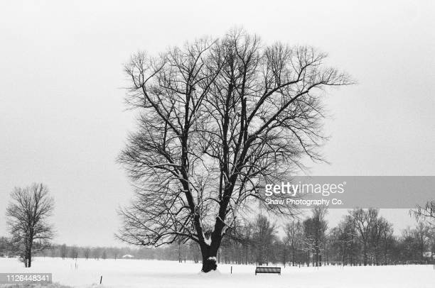 winter tree and bench in delaware park buffalo new york - buffalo new york state stock pictures, royalty-free photos & images