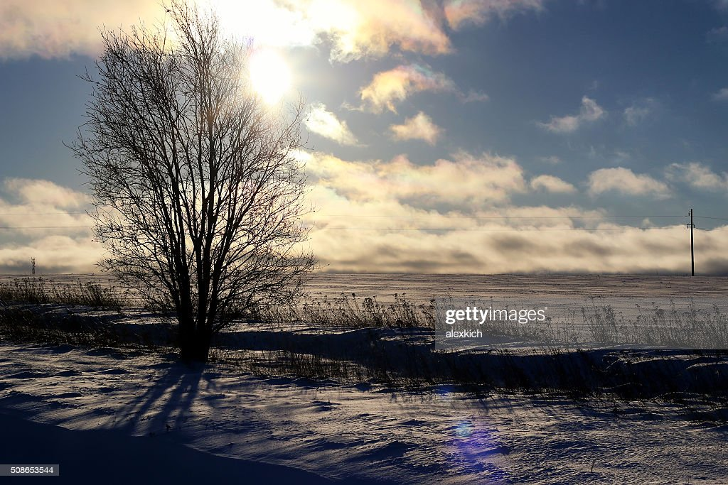 Winter tree in a field : Stock Photo