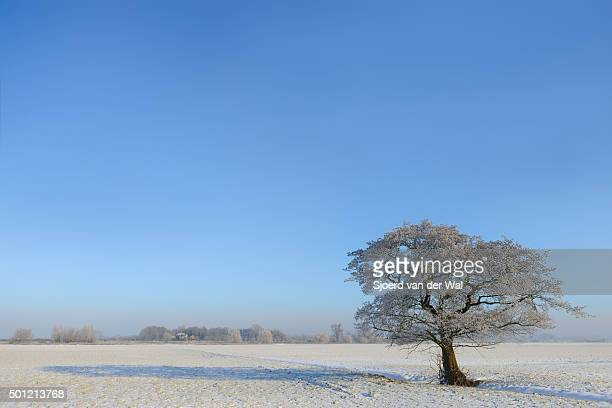 "winter tree in a snowy landscape - ""sjoerd van der wal"" photos et images de collection"