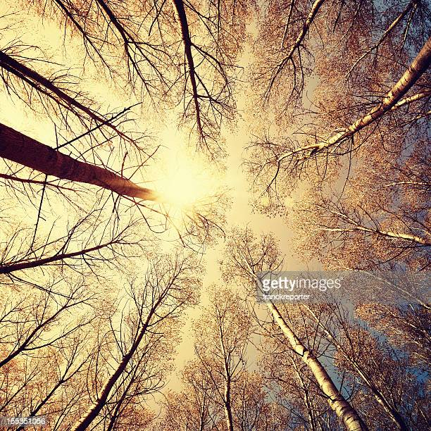 Winter tree in the forest with sunflare