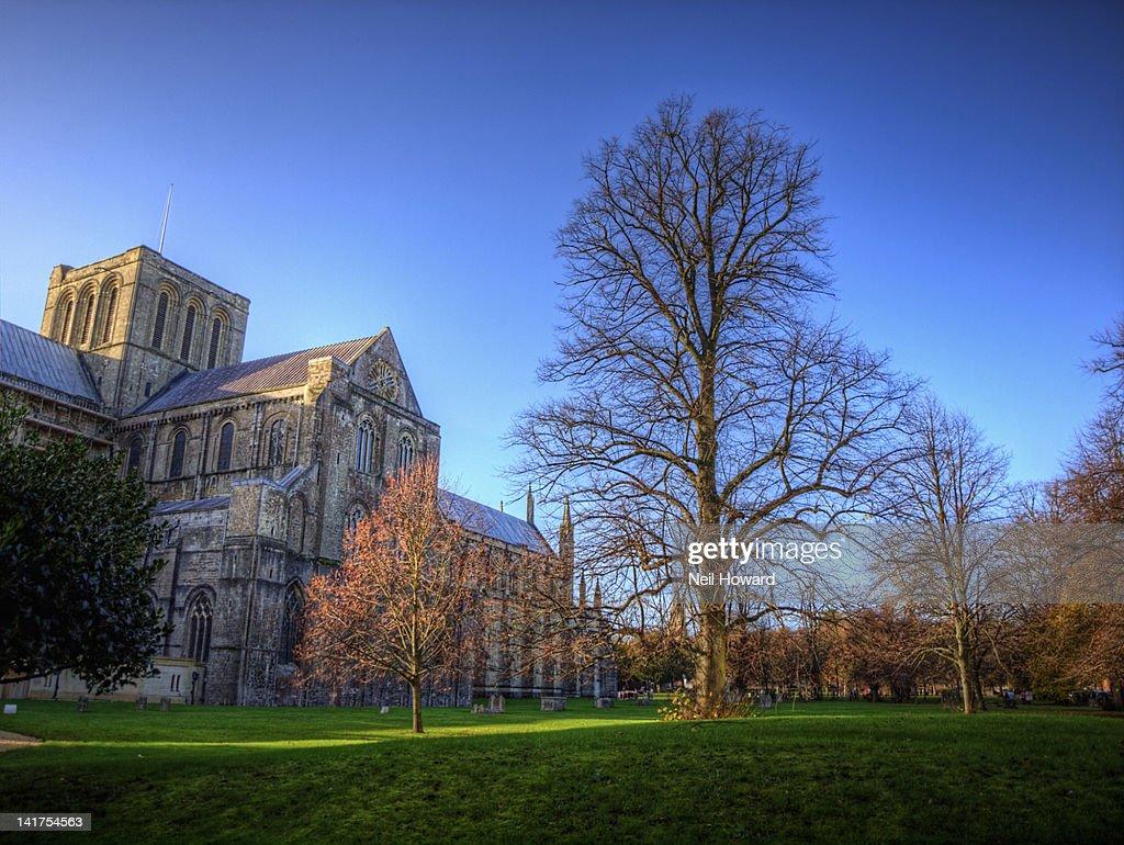 Winter tree near Winchester Cathedral : Foto de stock