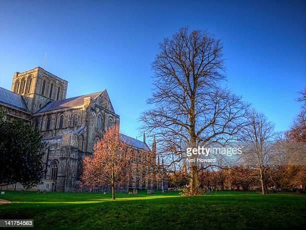winter tree near winchester cathedral - winchester hampshire stock photos and pictures