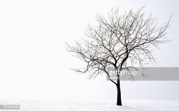 winter tree - bare tree stock pictures, royalty-free photos & images
