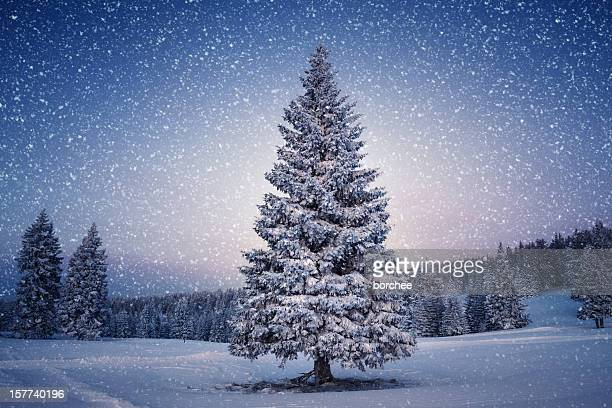 winter tree - christmas tree stock pictures, royalty-free photos & images