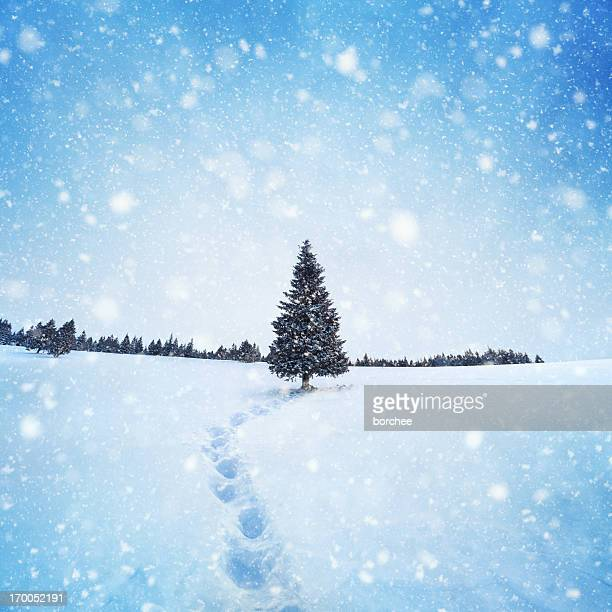 winter tree - country christmas stock pictures, royalty-free photos & images