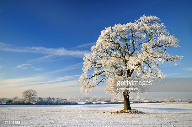 winter tree - winter solstice stock photos and pictures