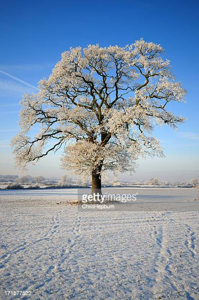 winter tree - winter solstice stock pictures, royalty-free photos & images