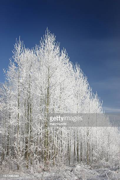 winter trees and blue sky - bradford england stock pictures, royalty-free photos & images