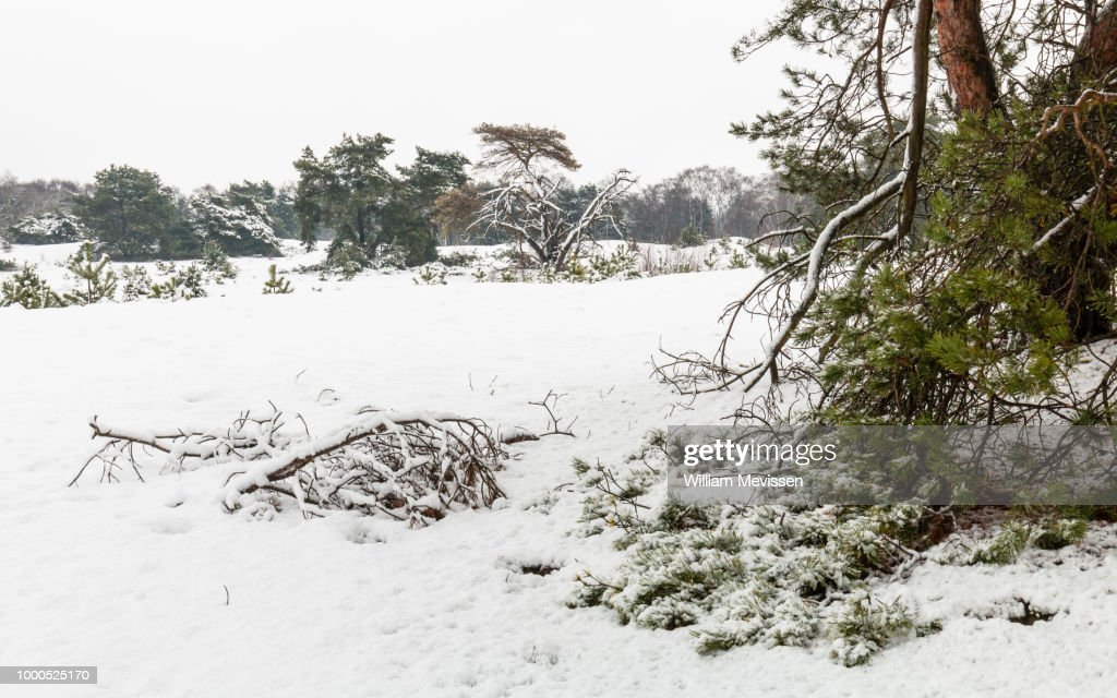 Winter Trees And Branches : Stockfoto