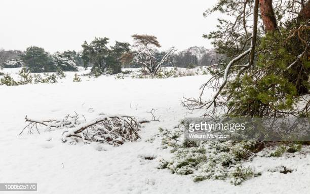 winter trees and branches - william mevissen stockfoto's en -beelden