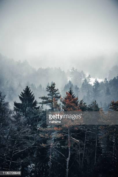 winter trees in foggy landscape - kruin stockfoto's en -beelden