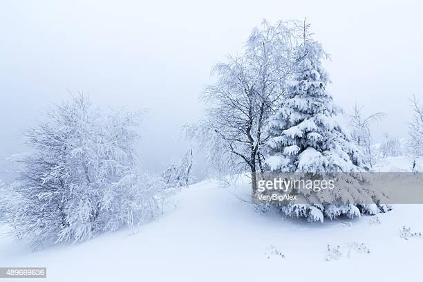 Winter Bäume im Schnee bedeckten Berge mit frischen