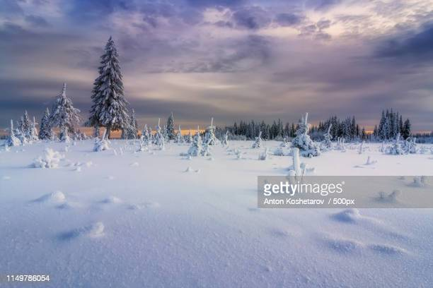 winter trees - russia stock-fotos und bilder