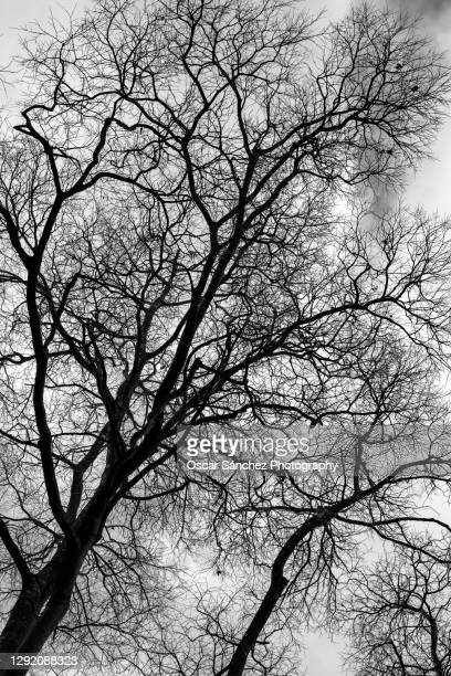 winter trees - branch stock pictures, royalty-free photos & images