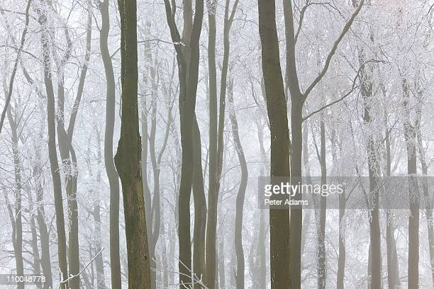 winter trees with frost and snow, england - peter snow stock pictures, royalty-free photos & images