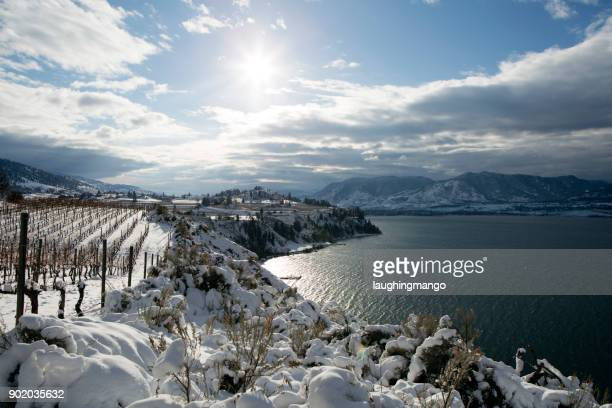 winter vineyard okanagan valley - thompson okanagan region british columbia stock pictures, royalty-free photos & images