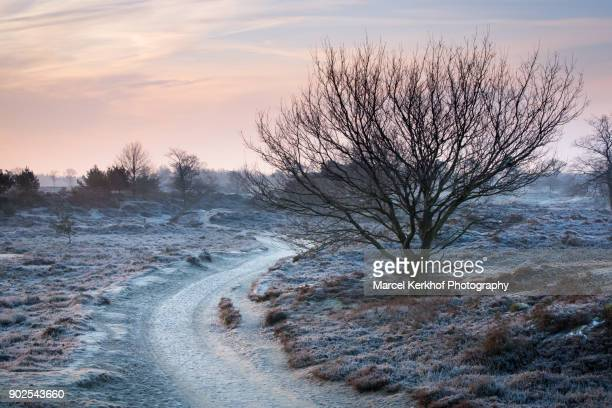 winter walk - drenthe stock pictures, royalty-free photos & images