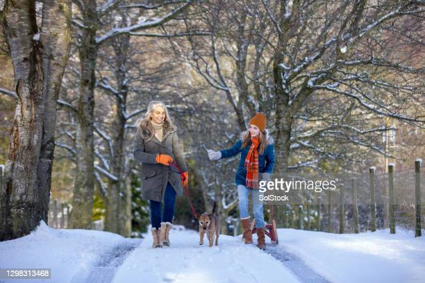 winter walks - snow stock pictures, royalty-free photos & images