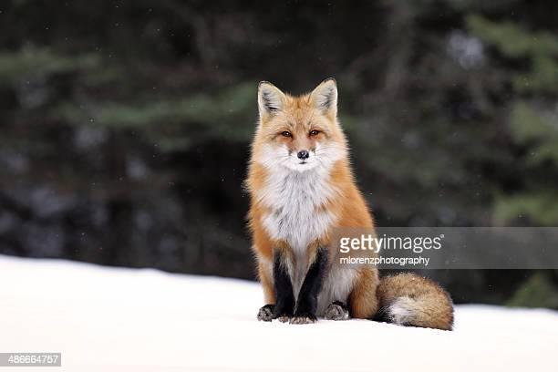 Winter Watcher