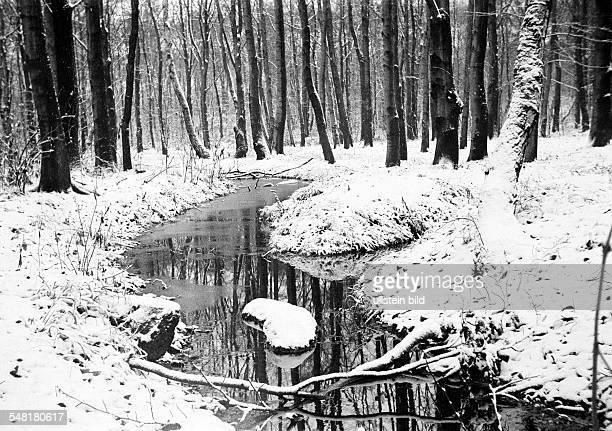 Winter, weather, snow, snowy landscape, park, wood, trees, brook, Alsbach, Alsbach Valley, D-Oberhausen, D-Oberhausen-Sterkrade, Ruhr area, North...