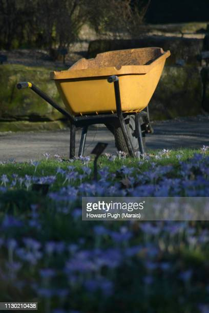 Winter Wheelbarrows in A Spring Garden