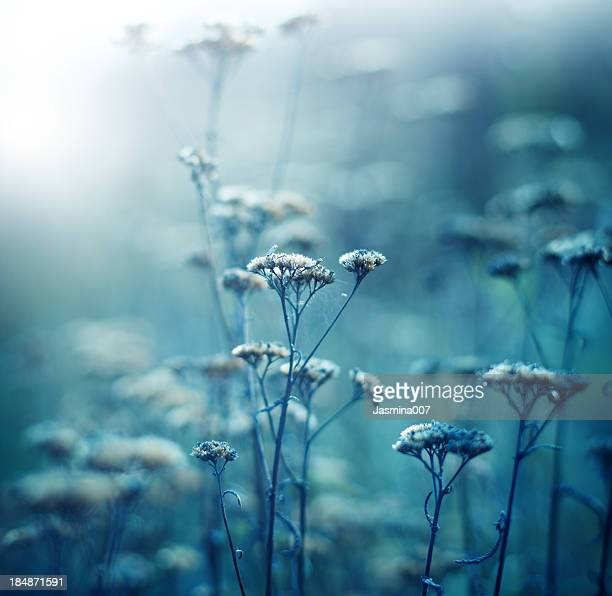 Winter Wildblumen