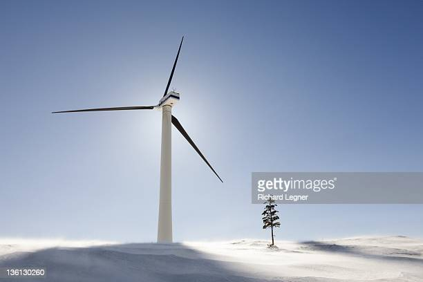 Winter Wind Turbine