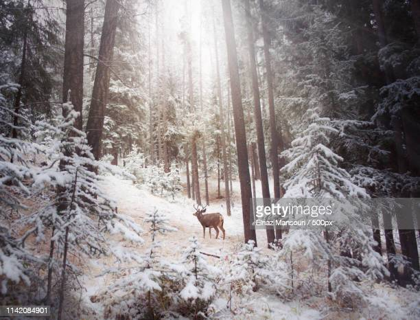 winter wonderland in banff, alberta - nature stock pictures, royalty-free photos & images