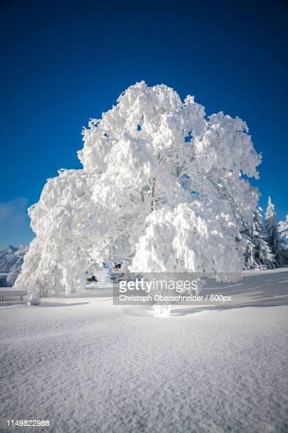 winter wonderland - 深い雪 ストックフォトと画像