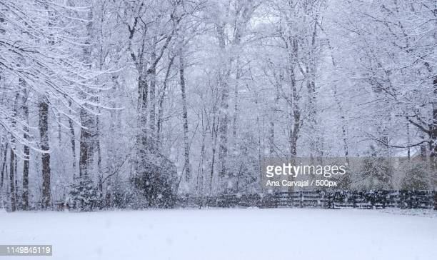 winter wonderland - carvajal stock photos and pictures
