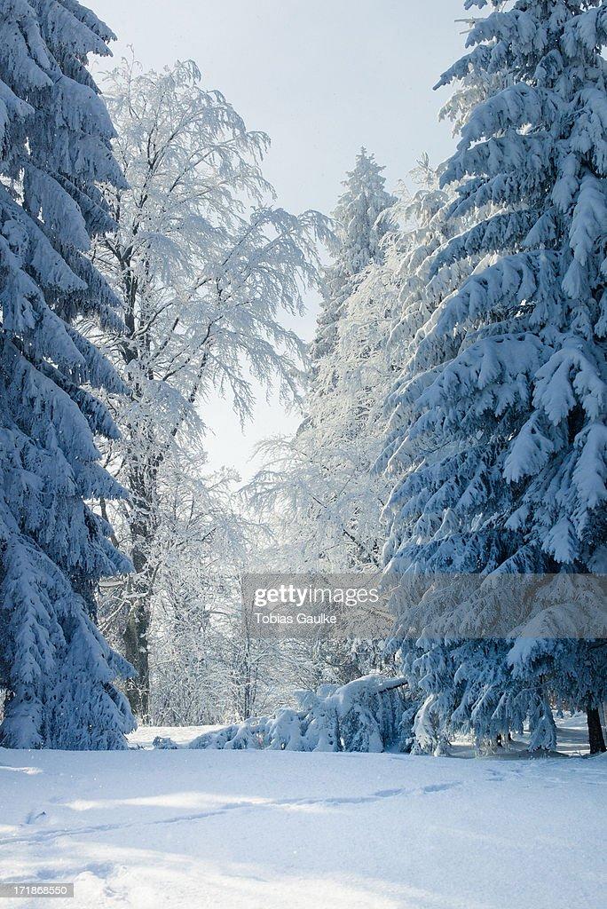 Winter wonderland : Stock-Foto