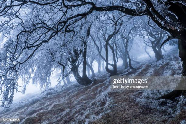 Winter wonderland with a frozen woodland in the mist. Winter in the Peak District National park. UK.