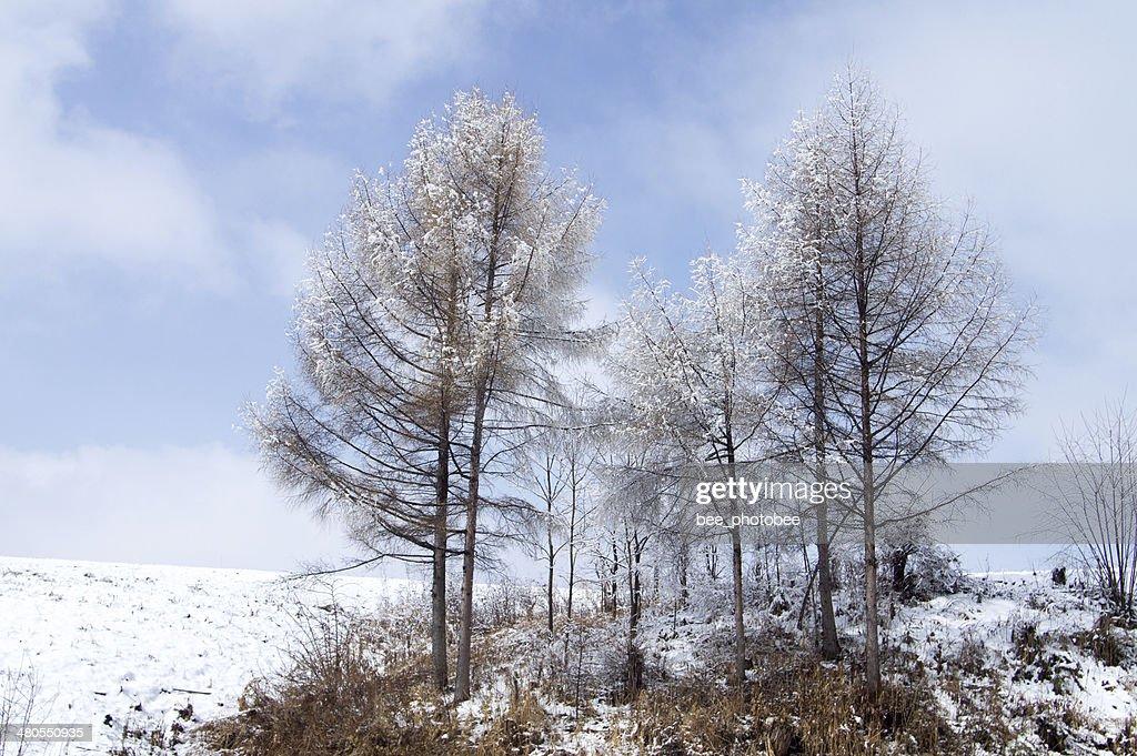 Madera de invierno : Foto de stock