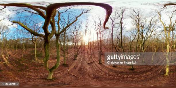 winter woodland - equirectangular panorama stock pictures, royalty-free photos & images