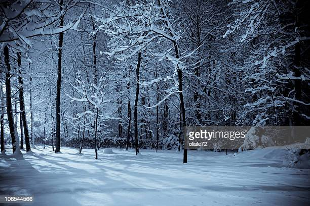 Bois d'hiver paysage scène de nuit et Selenium ton