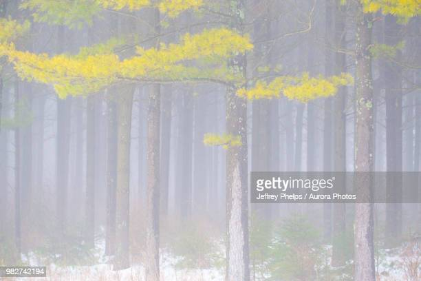 winter woods, saukville, wisconsin, usa - staadts,_wisconsin stock pictures, royalty-free photos & images