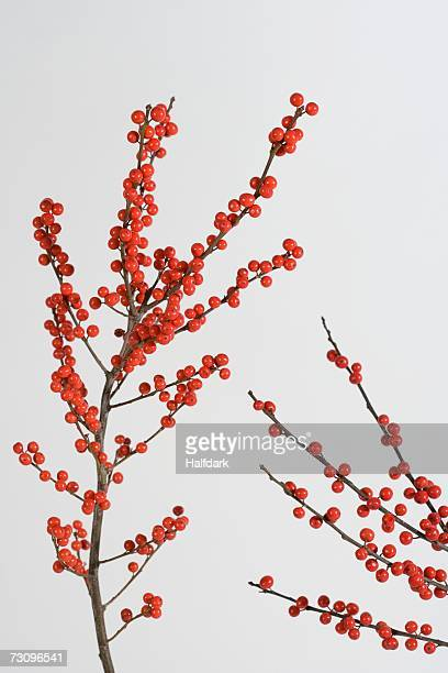 winterberry branches - holly stock pictures, royalty-free photos & images