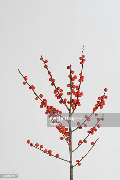 winterberry holly branch - branch plant part stock pictures, royalty-free photos & images