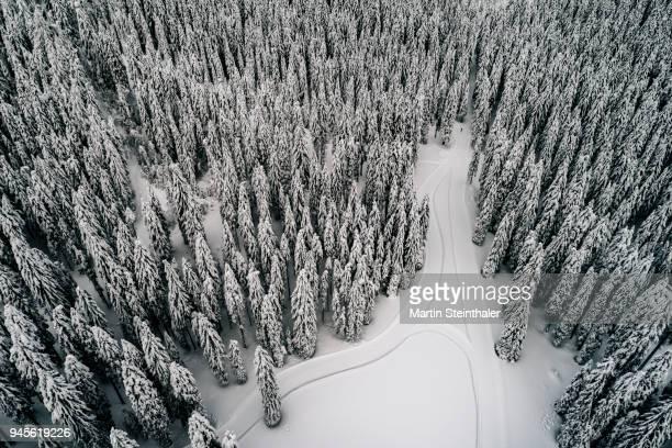 winterlicher wald mit loipe für langlaufen - luftaufnahme - luftaufnahme - fotografias e filmes do acervo