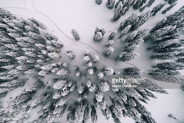 winterlicher wald mit loipe für langlaufen - luftaufnahme - クロスカントリースキー ストックフォトと画像