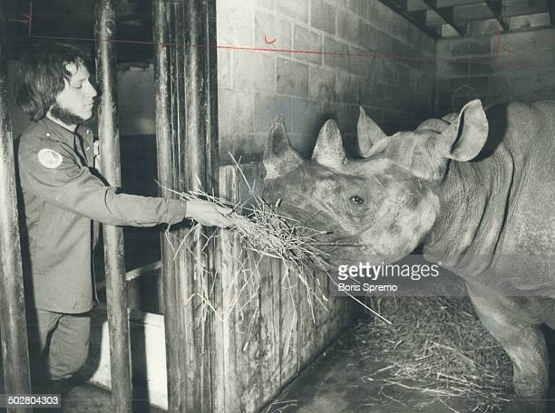 Winters are great at the zoo The $2 million worth of animals at the Metro Zoo seem to be enjoying the wintry weather Lisa the rhinoceros who was born...