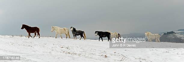 A Winter's day near Carreg Cennen.