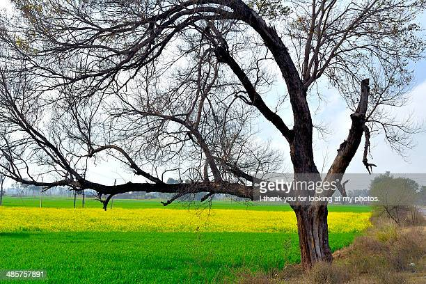 winters in punajb - punjab india stock pictures, royalty-free photos & images