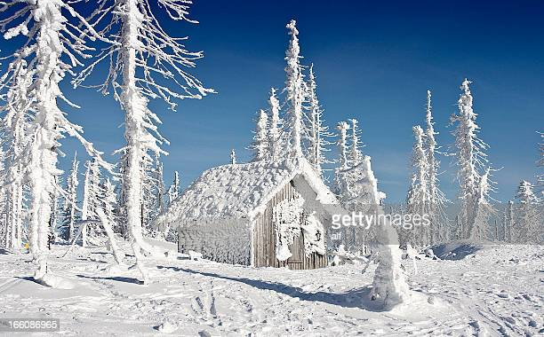 Winter`s  Tale Forest