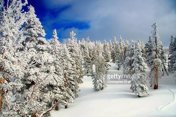 winterscape, lake tahoe - snowfield stock pictures, royalty-free photos & images