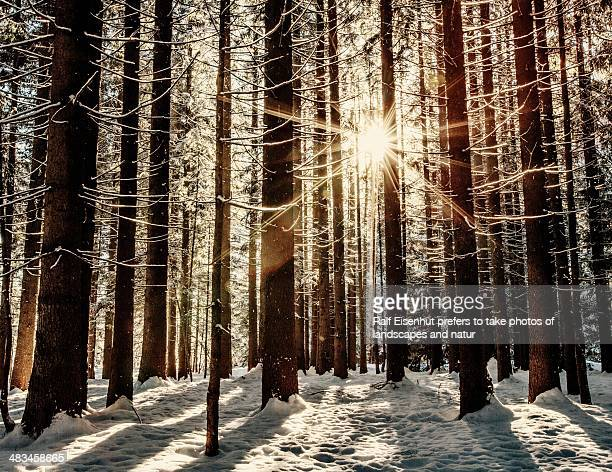 wintersun in the forrest( explore # 25, 17.02.2013 - natur stock pictures, royalty-free photos & images