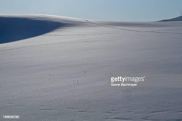 winter-wonder-land