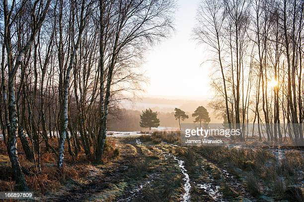 wintery track through silver birches - winter stock pictures, royalty-free photos & images