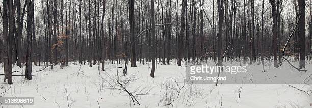 wintry forest - london ontario stock photos and pictures