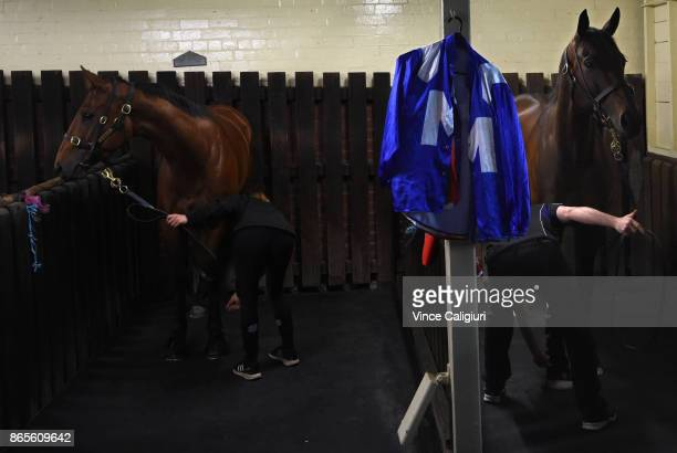 Winx and Egg Tart are seen ready and waiting for trackwork session during Breakfast With The Best at Moonee Valley Racecourse on October 24 2017 in...